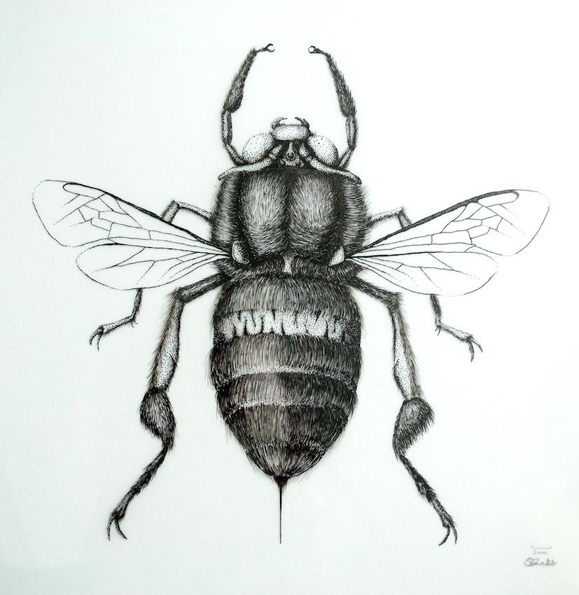 Amegilla bombiformis - Teddy Bear Bee
