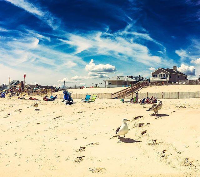 Summer is coming  #heat #summer #beach #seagull  #sun #sand #summersky