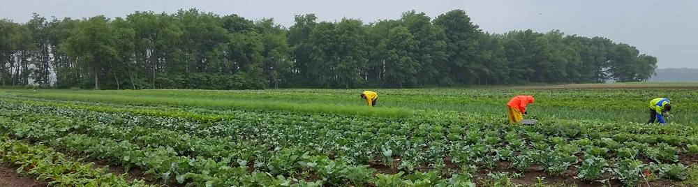 Rainy harvest
