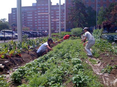 Gardens_BK-Farmyard-WS-planting.jpg
