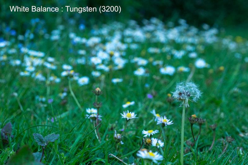 Tungsten (3200)