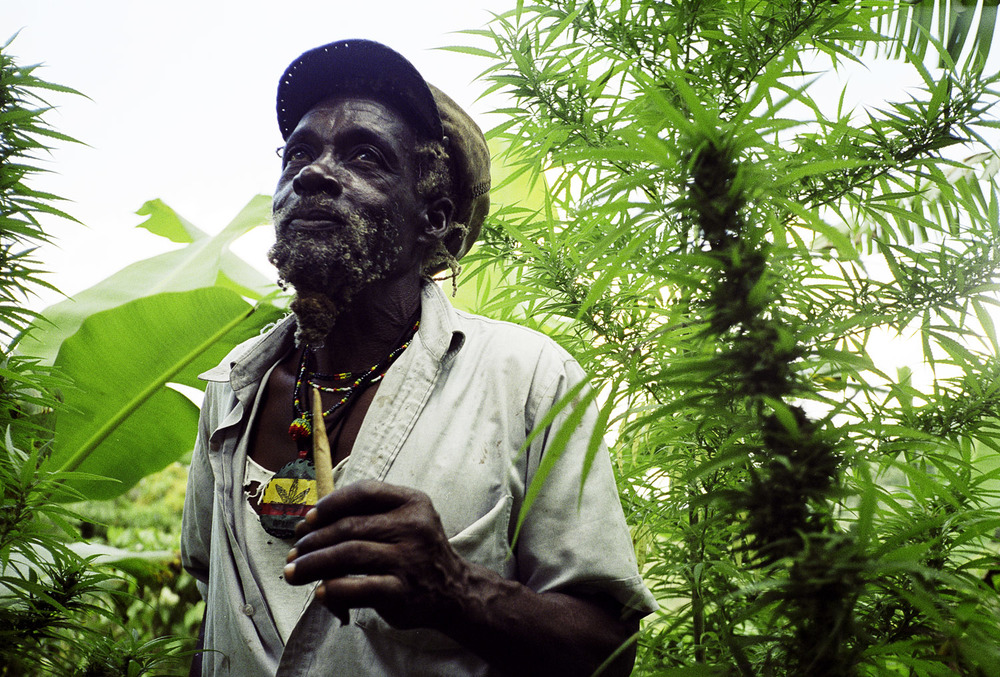 Boom Rasta, Blue Mts., Jamaica