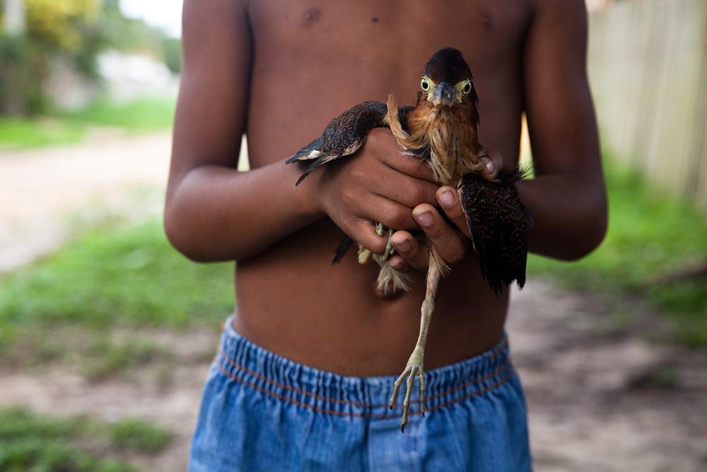 Thiago & Socó Onça, Maués