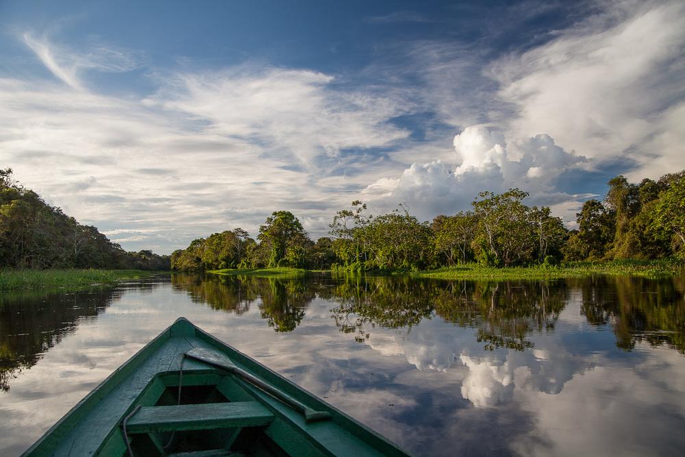 Mamirauá Reserve, Amazonas, Brasil