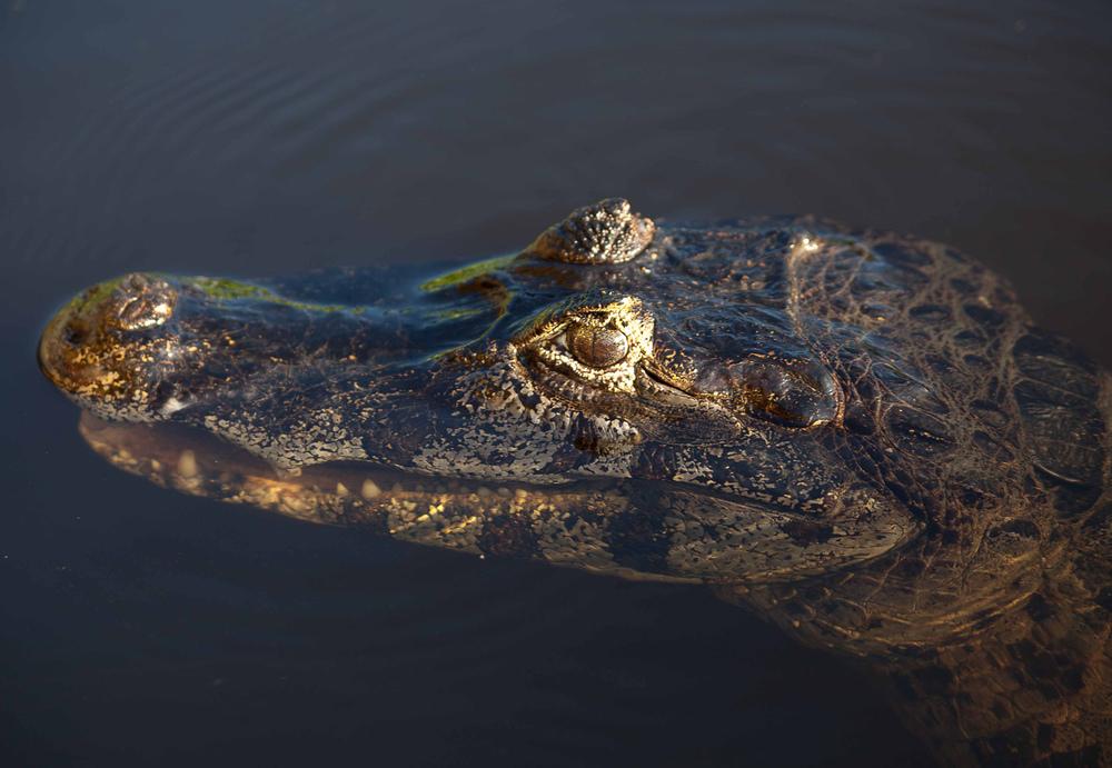 Pantanal-1411.jpg