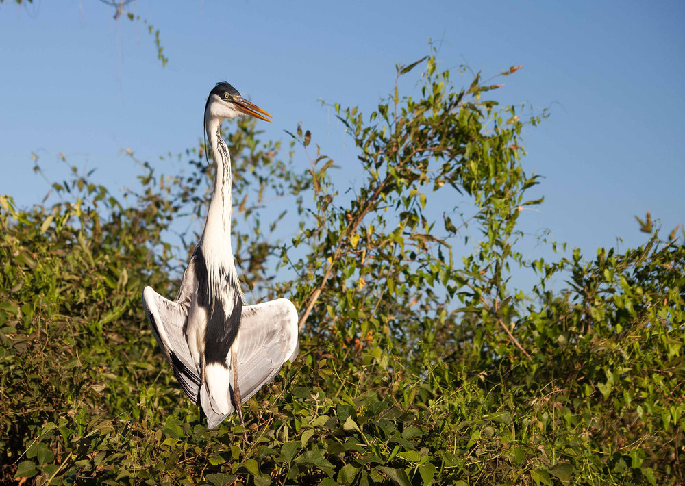 Pantanal-1375.jpg