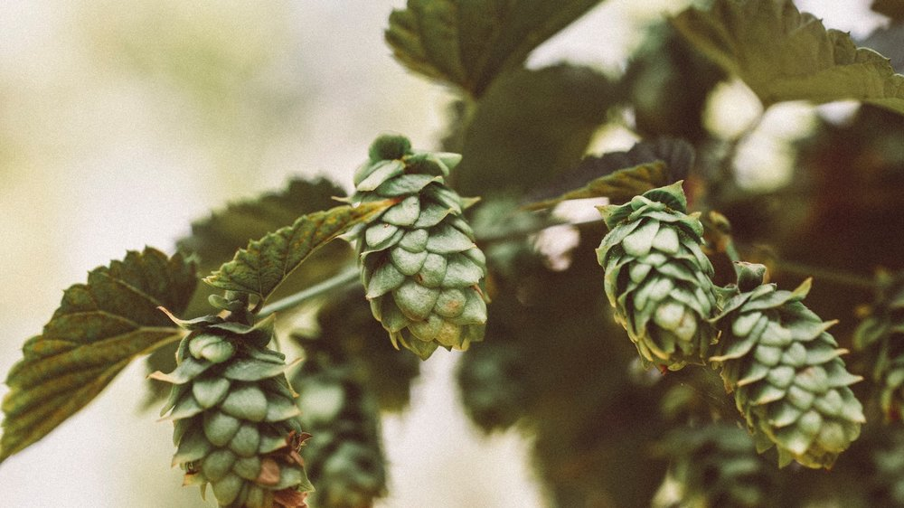 Locally-produced beers, crafted in Canada. -