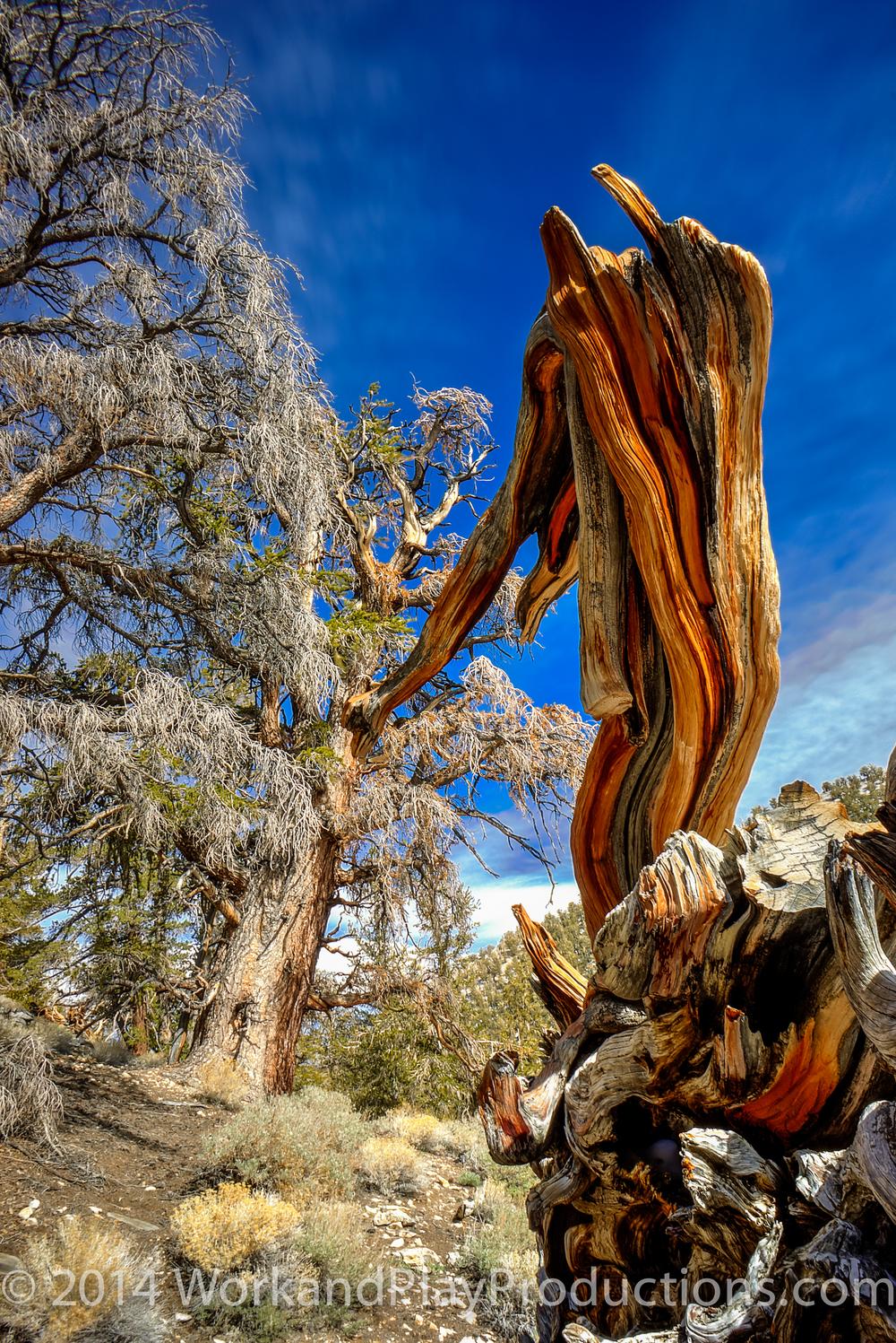 bristle tree 1.jpg