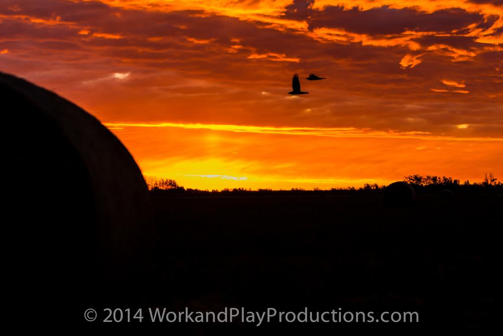 ducks sunrise 1.jpg