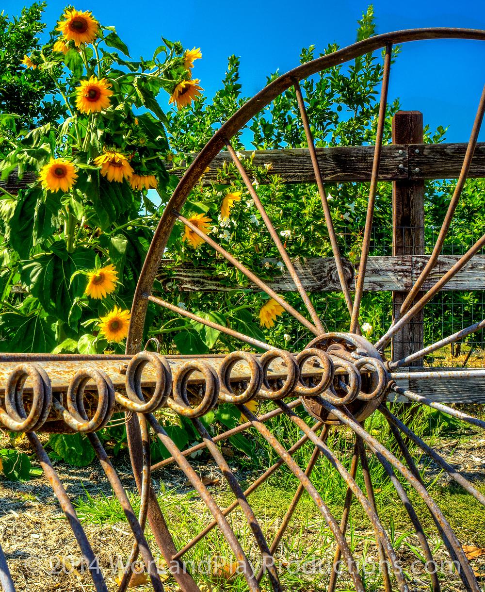 flower wheel 2.jpg
