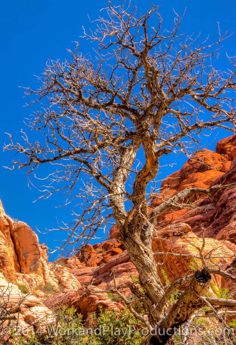 Red rock tree 1.jpg