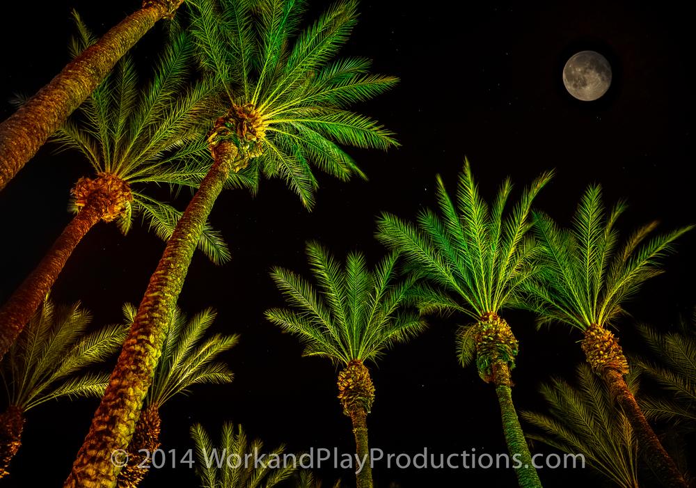 trees moon1.jpg