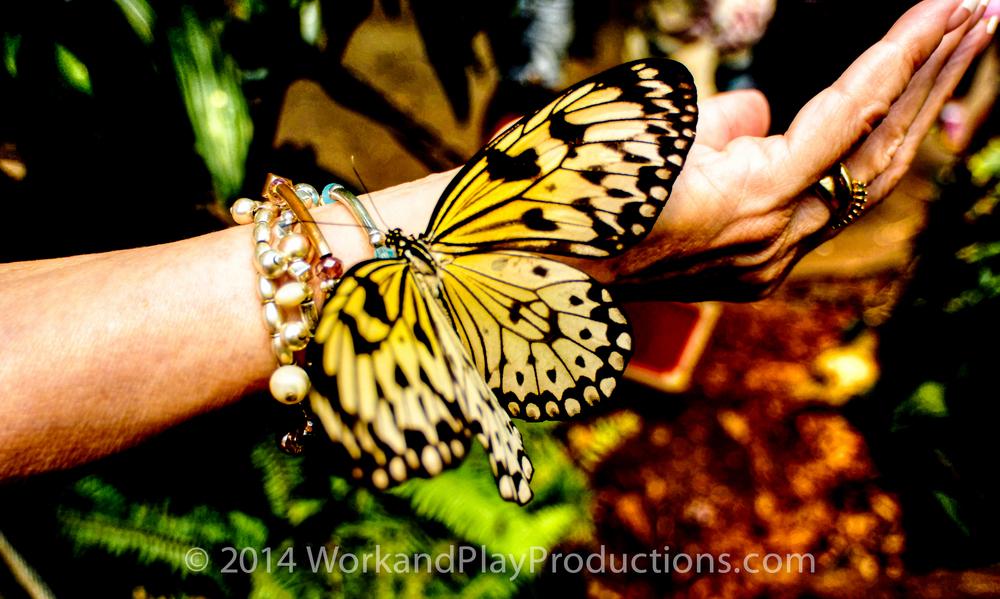 butterfly 1_tonemapped a.jpg