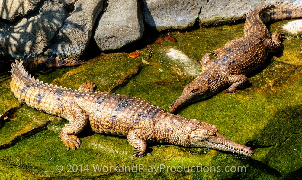 gators 1.jpg