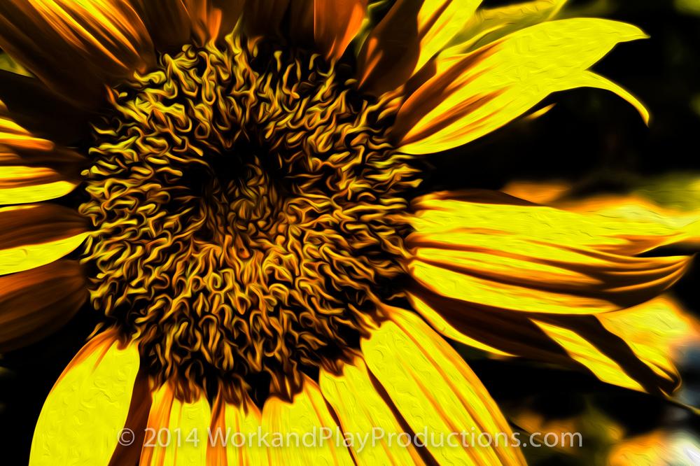 sunflower big art.jpg