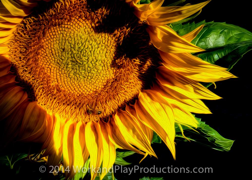 sunflower bee art.jpg