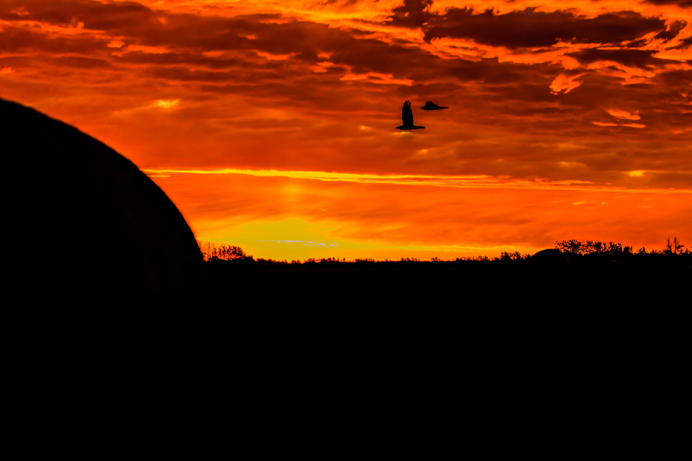 ducks sunrise 1 filter.jpg