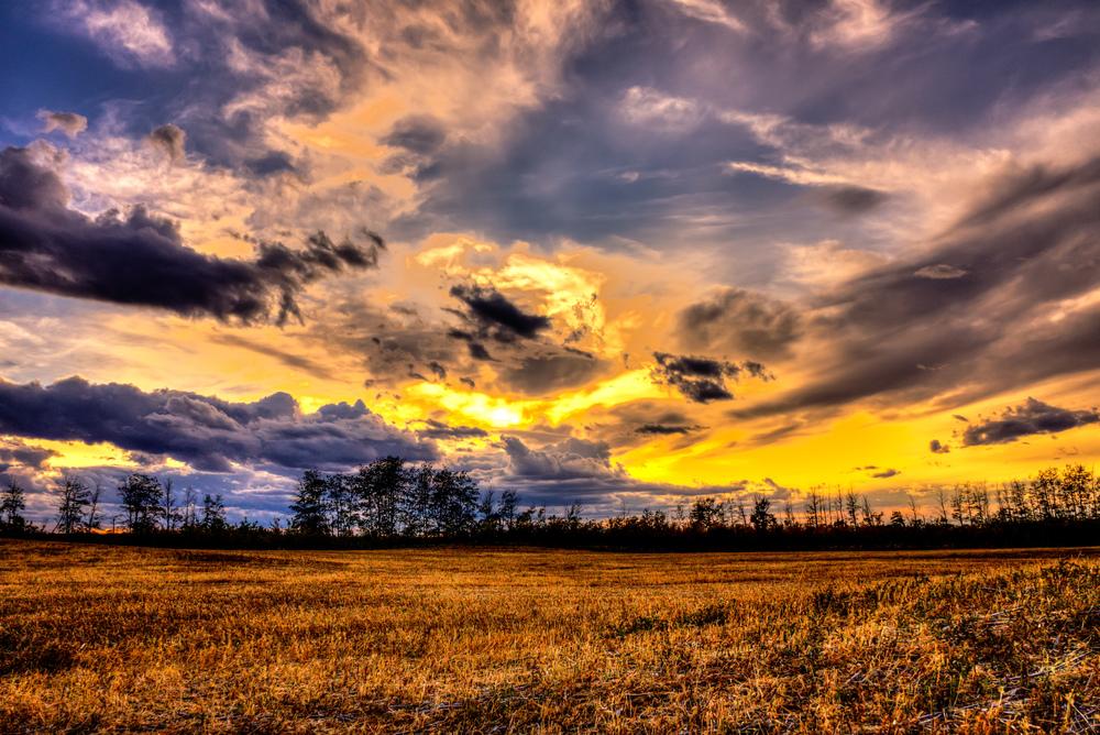 field 2 sunset.jpg