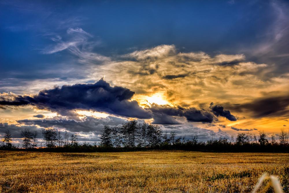 field sunset.jpg