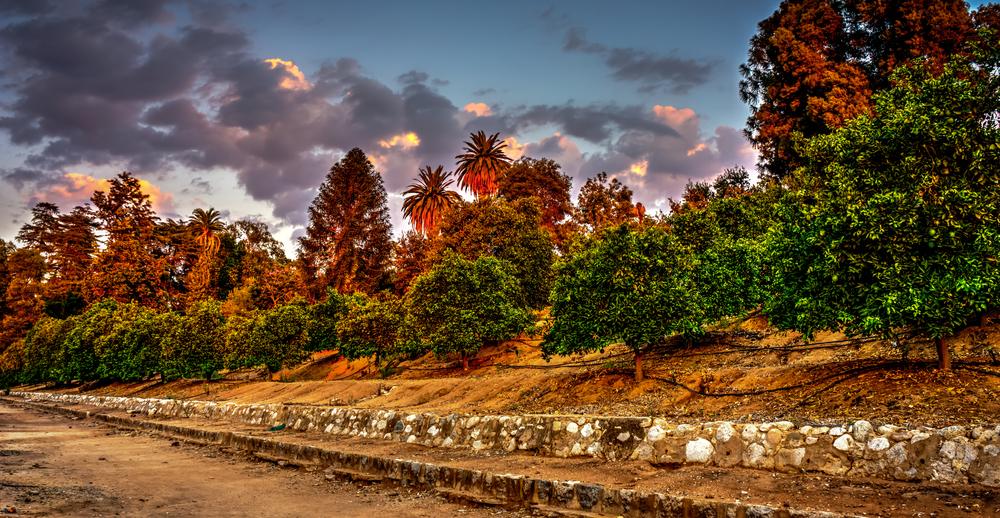 grove sunset.jpg