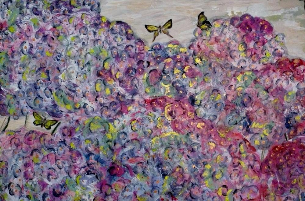 Papillon Hydrangeas