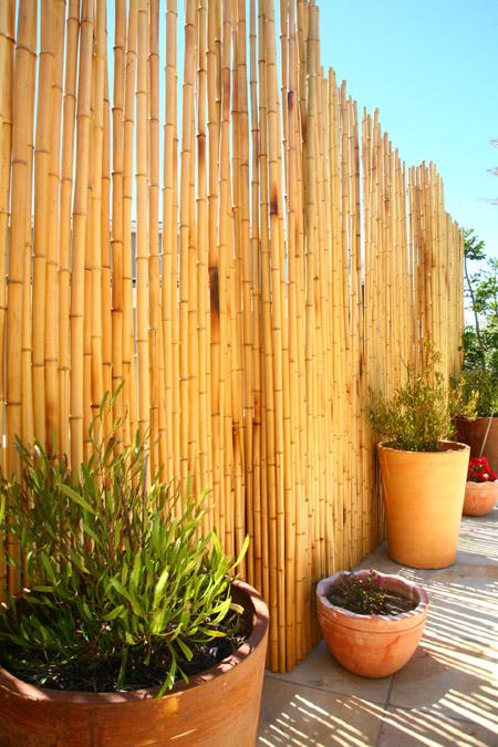 Bamboo Fence2.jpg