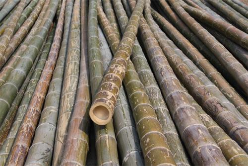Green poles.jpg