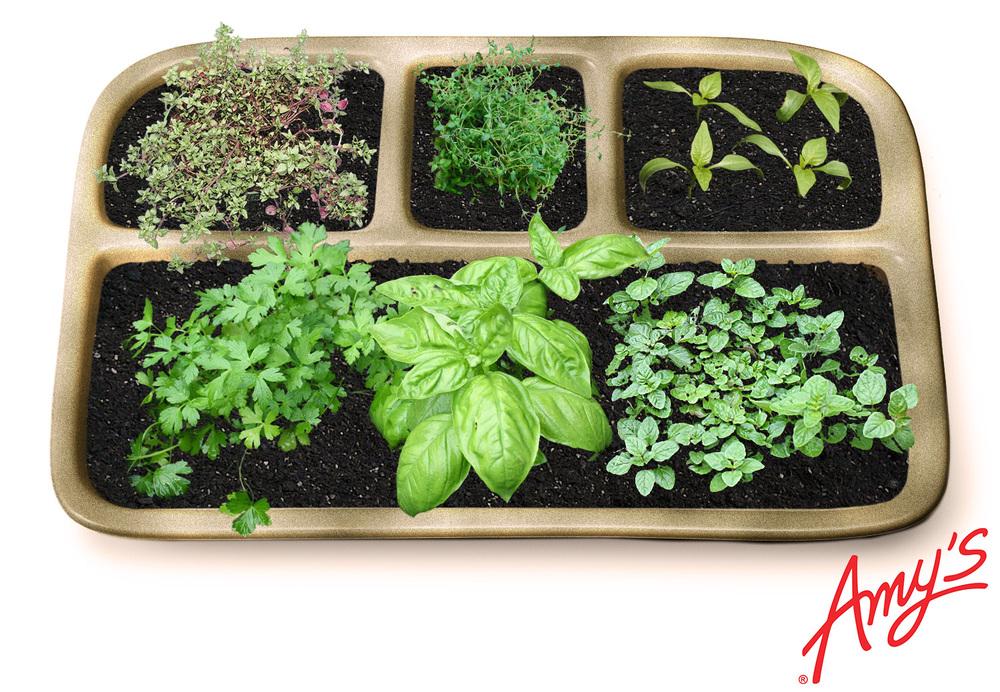 herbtray.jpg