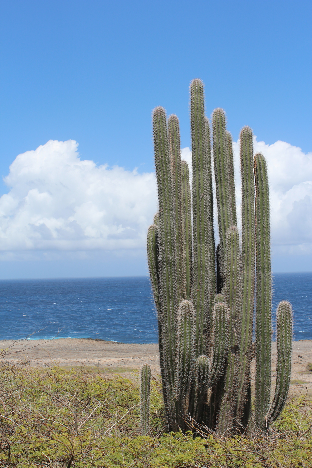 Cactus and the Ocean