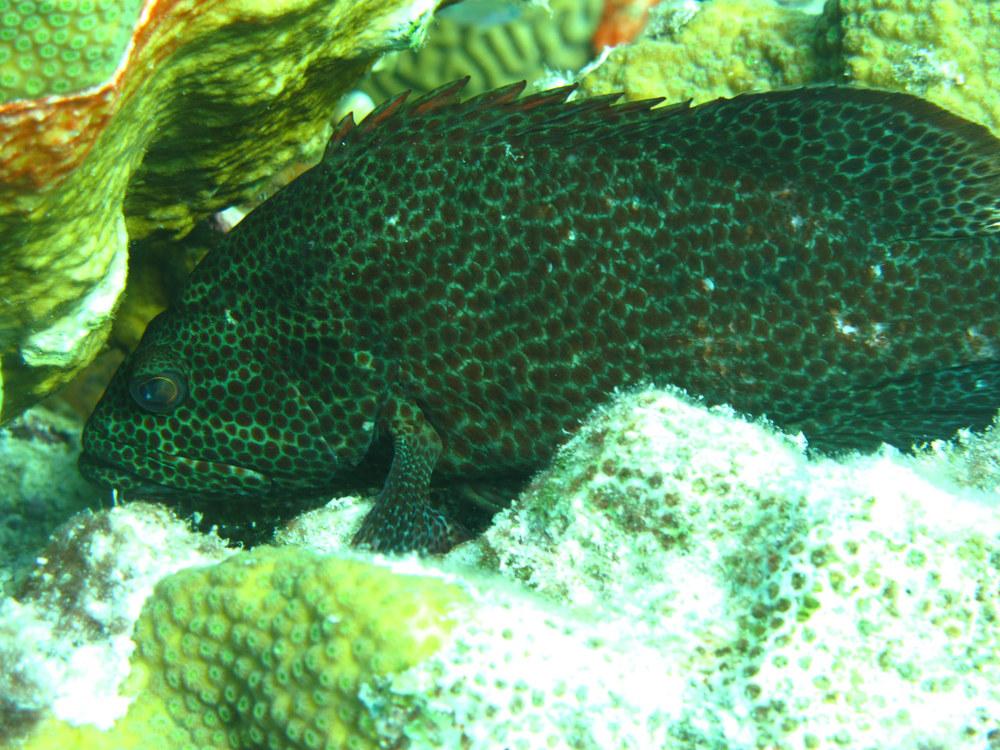 Fish Taking a Break