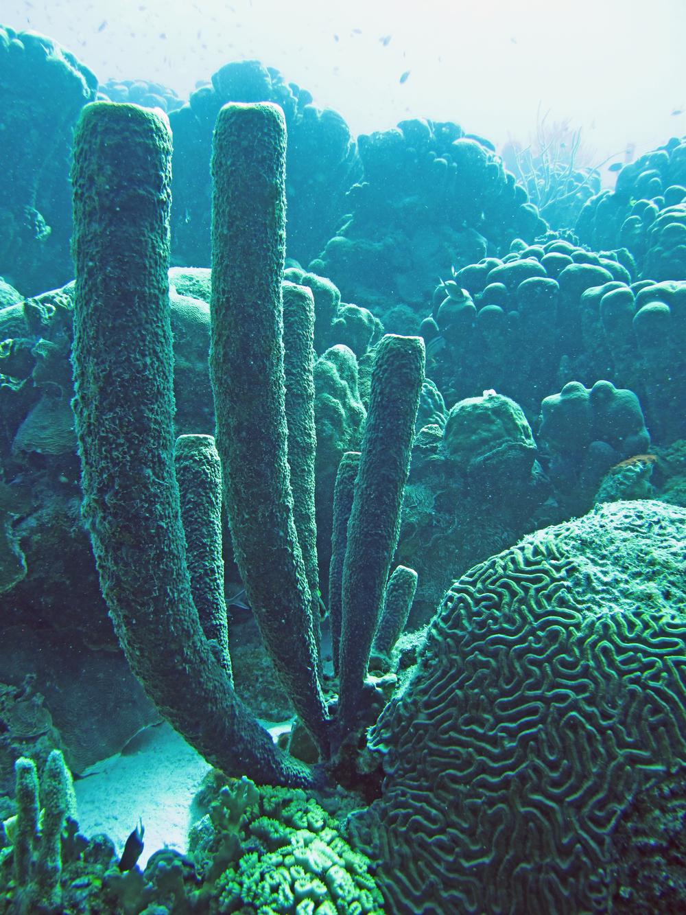 The coral landscape enchants me