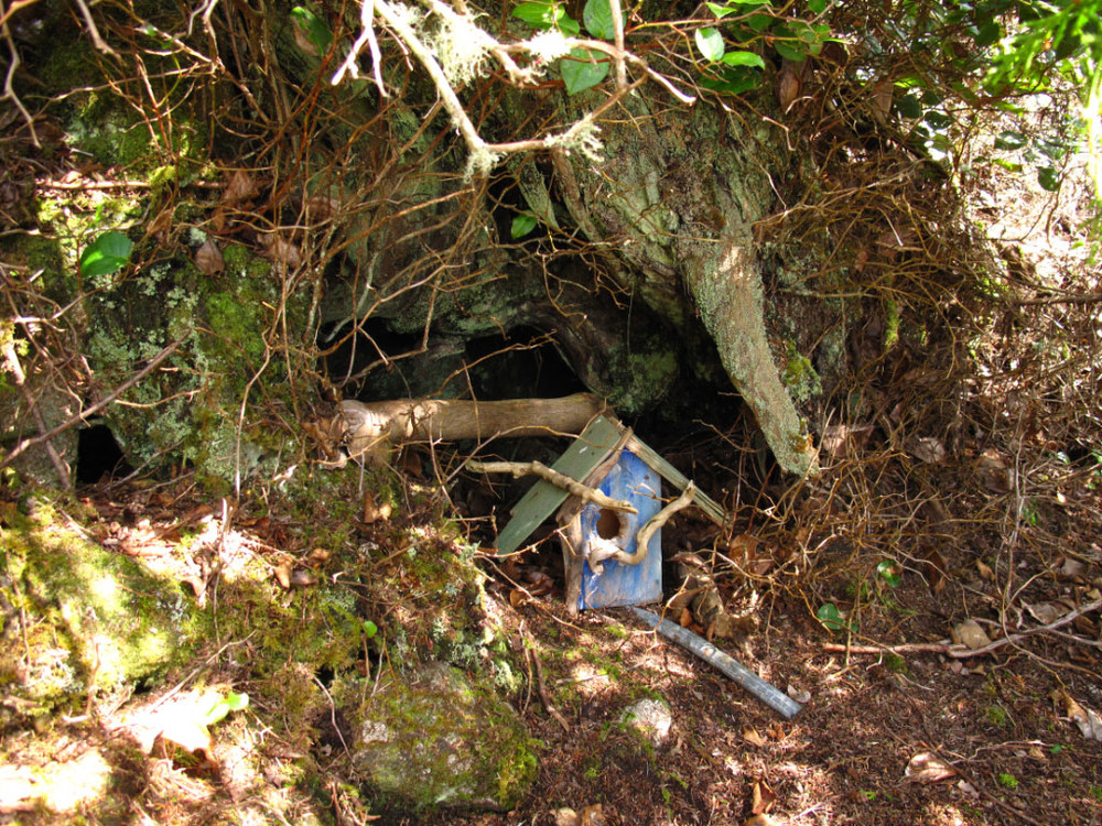 Love the little fairy houses in the forest