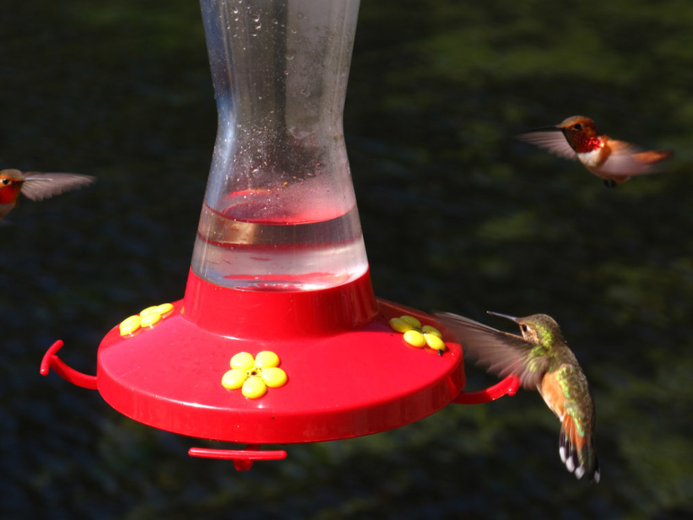 So many hummingbirds :0