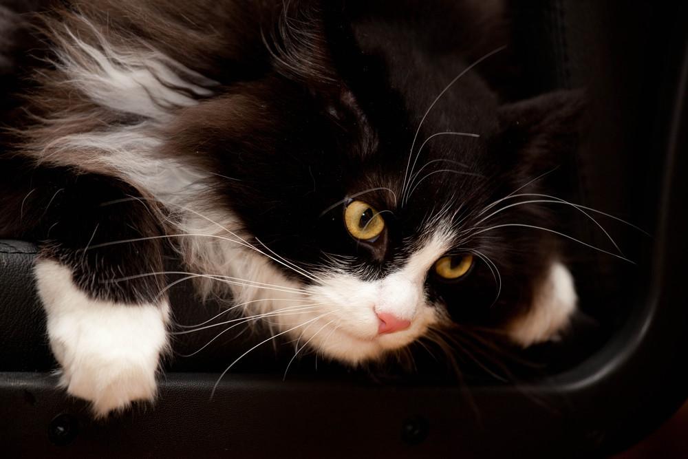 В от тут кот как бы спрашивает: -Слыш, позвонить есть? А если найду?