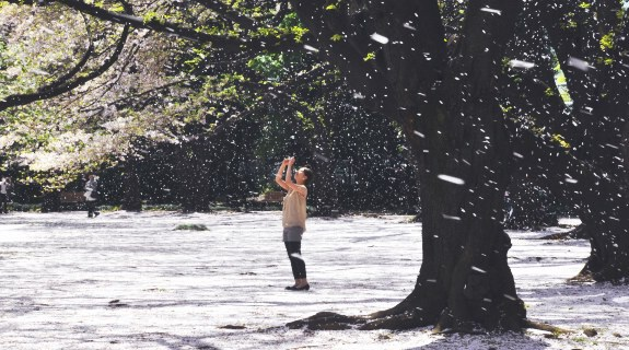 Hanafubuki: a blizzard of falling petals