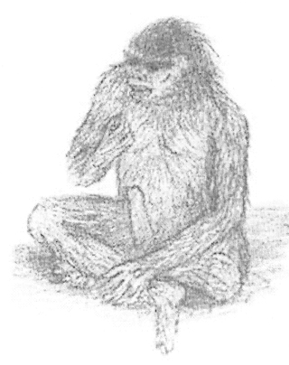 Herpetologist and cryptozoologist Jordi Magraner drew this obviously male bar-manu (a crypto-hominid reported from Pakistan) as described by a witness. The account was published by Michel Raynal (2001). Image: Raynal (2001).