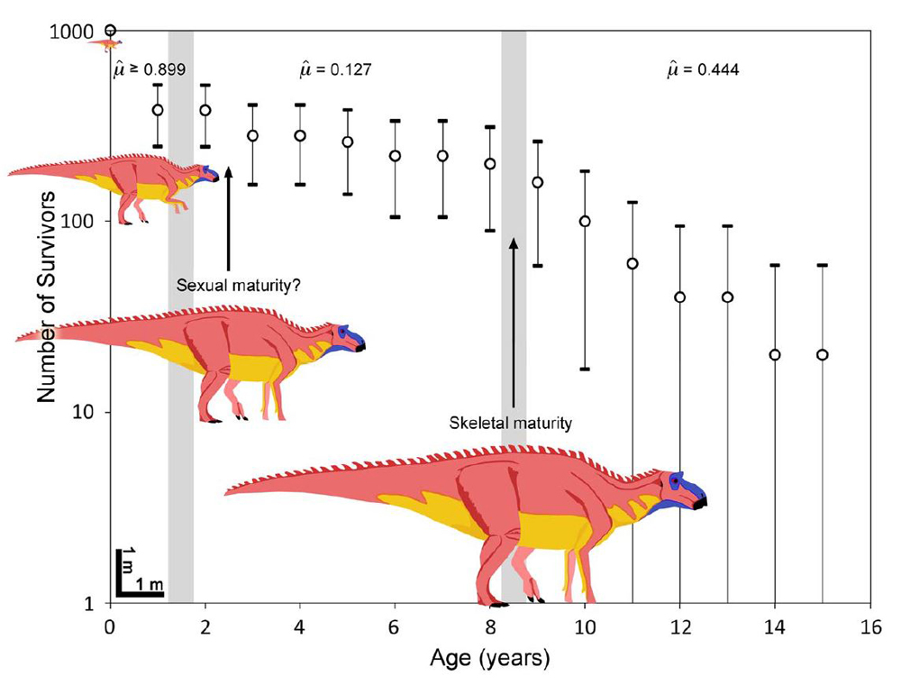 If dinosaurs like hadrosaurs (this graph shows  Maiasaura ) grew this quickly - we're talking about an animal that is well over 1000 kg within 2 years  and  capable of breeding by that time, and can be raised on a diet of easily obtained, cheap fodder and produces large clutches to boot - well, we have an animal that might be very desirable as a subject of domestication. Image: Woodward  et al . (2015).