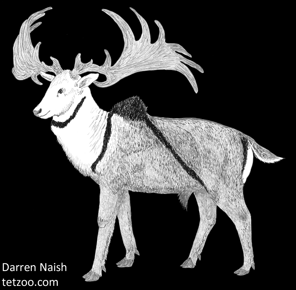 Megaloceros-appearance-2018-Megaloceros-Naish-black-background-1000-px-tiny-Sept-2018-Darren-Naish-Tetrapod-Zoology.jpg