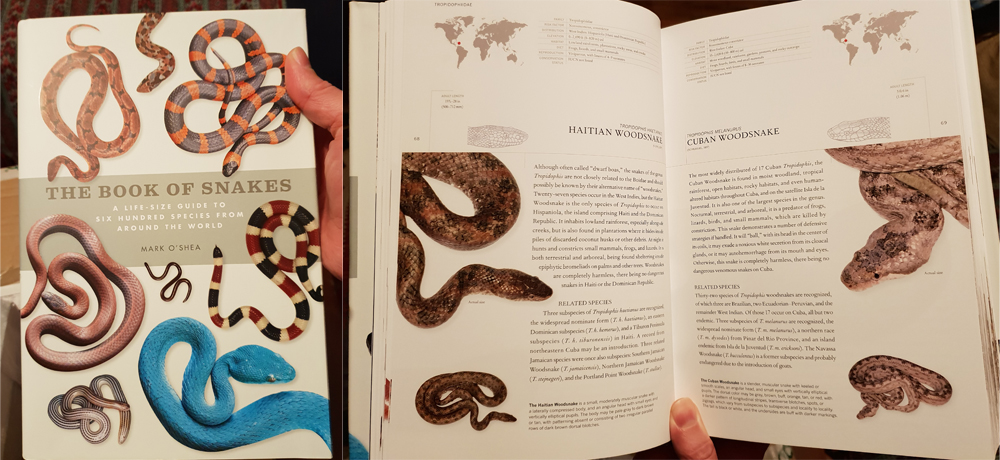Mark O'Shea's 2018  The Book of Snakes  , a must-have for those interested in reptiles. Image: Darren Naish.