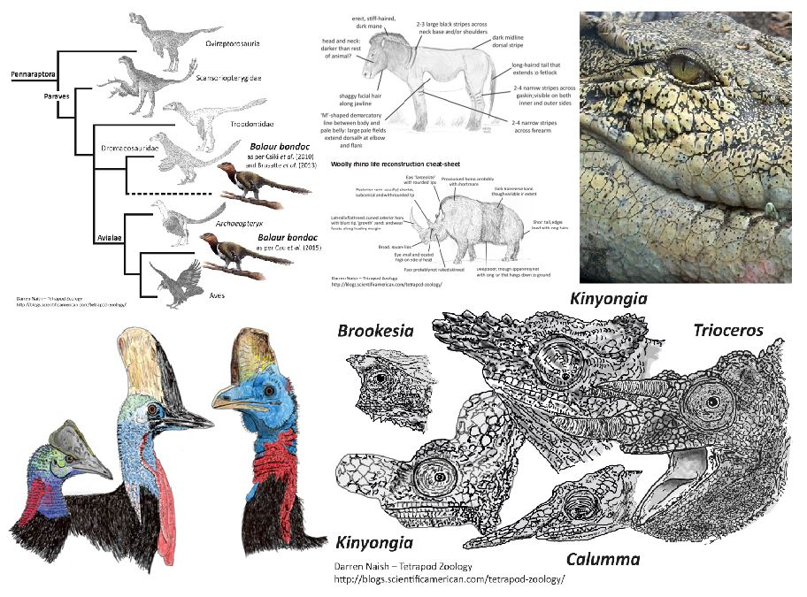 A montage depicting things covered in just a few of the TetZoo ver 3 articles, all of which are now safely locked away and only available to you if you own a SciAm subscription.