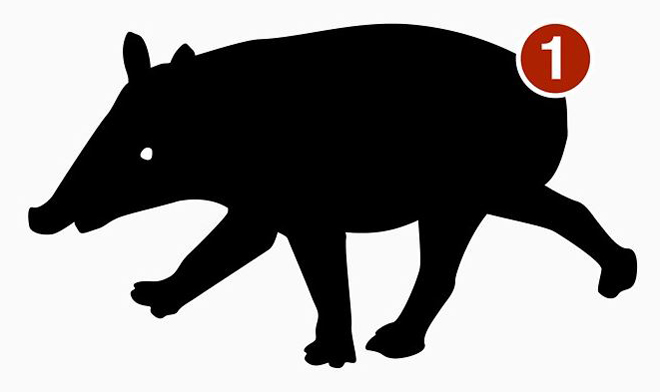 There's TetZoo HAVE YOU HEARD ABOUT THE NEW TAPIR merchandise.   Go here.