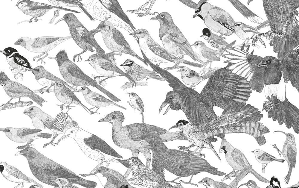 Passerine birds are diverse, to a degree… here's just a sample of their diversity. This is part of a giant montage that's being built for   my in-prep textbook The Vertebrate Fossil Record  . Image: Darren Naish.