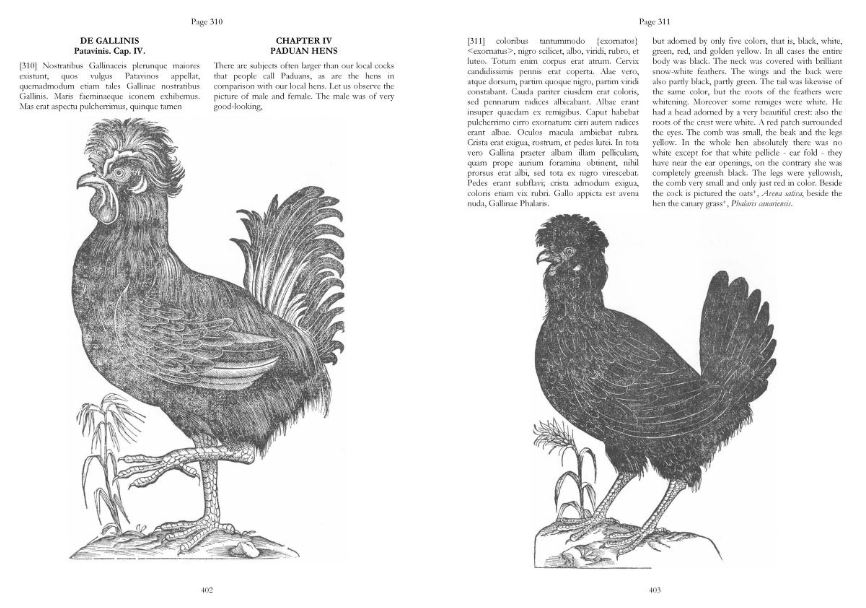 Aldrovandi was a skilled and accurate artist, and his illustrations of known species - familiar and foreign - are usually highly accurate, as is demonstrated by these chickens. His chicken text also includes several illustrations of curassows, and they're all essentially accurate. Credit: Corti & Civardi (2009).