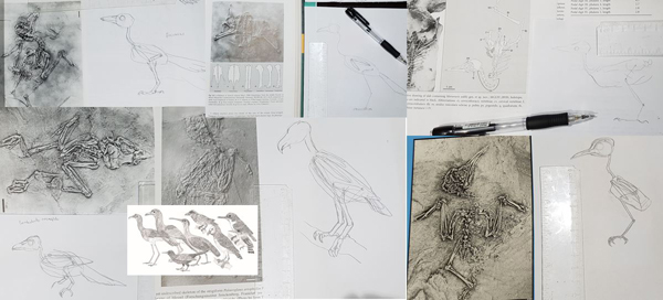 I've been drawing a whole lot of Paleogene birds for   The Big Book  . And the other birds as well. Image: Darren Naish.