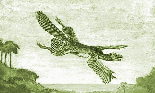 William Beebe's hypothetical tetrapteryx creature. A pre- Archaepteryx  glider. You'll note that Beebe was a pretty good artist [UPDATE: this is an error. The illustrations in this publication were by Dwight Franklin, not by Beebe!]. Image: Beebe (1915).