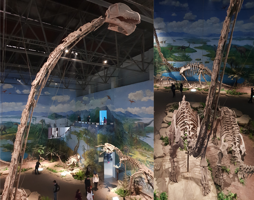 The necks of some sauropods - a good example is the ultra-long-necked  Omeisaurus , photographed at Zigong Dinosaur Museum - are somewhat laterally compressed for at least part of their length. Image: Darren Naish.