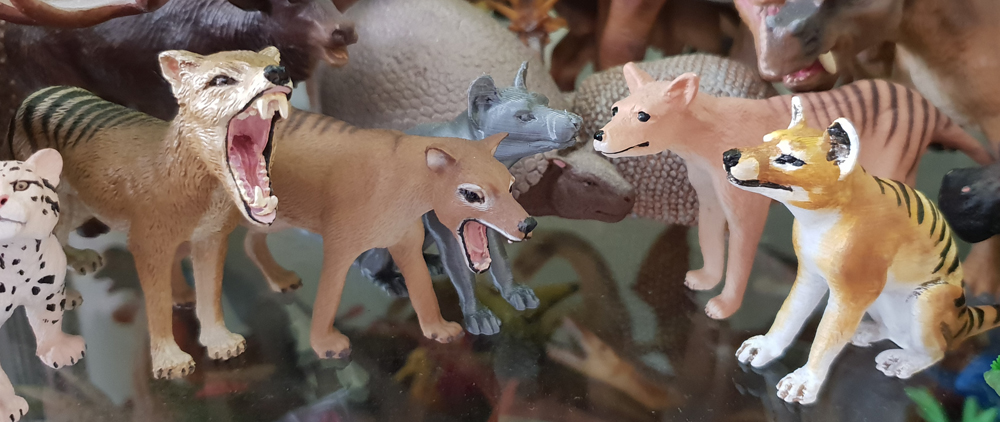 Toy thylacines - did you know that there are this many? The grey 3D-printed one - and the painted version at far right (the sitting one) - were obtained at TetZooCon 2018 and were made by Rebecca Groom of palaeoplushies. Image: Darren Naish.