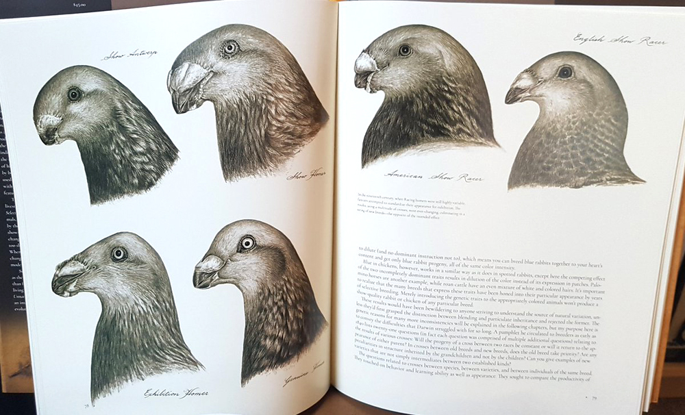Unnatural Selection  showcases an extraordinary number of unusual domestic animals (these are all domestic pigeon breeds), but the main theme is the evolutionary plasticity, and potential, that human selective breeding has created in these species. Image:   van Grouw (2018)  .