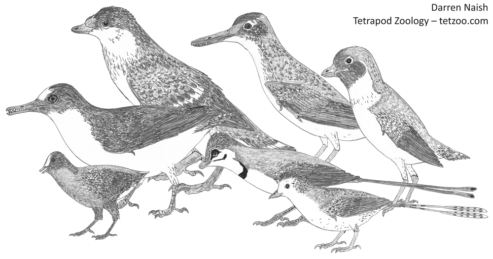 Enantiornithines — here are just a few of them. In-prep montage from my   in-prep textbook  . Image: Darren Naish.