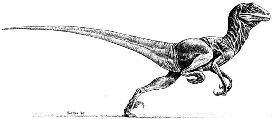 Robert Bakker's 1969 sprinting  Deinonychus , produced to accompany John Ostrom's seminal article on this amazing dinosaur. Artistic depictions like this one cement the idea that art has conveyed scientific concepts to the public... but you've heard all that before. This is one of several Bakker images included within the exhibition discussed in this article. Image: (c) Robert Bakker.